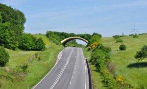 pontes-verdes-3-525